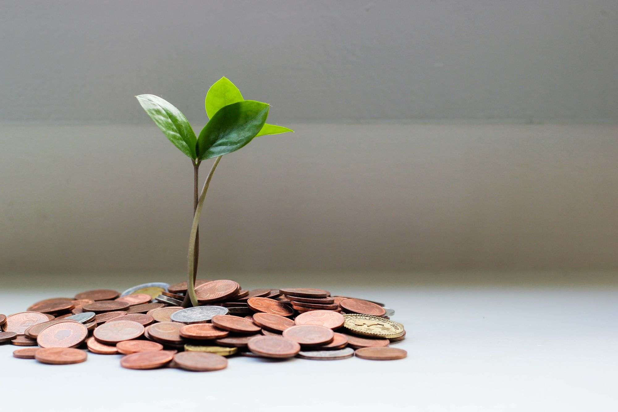 Money-tree-with-copper-coins