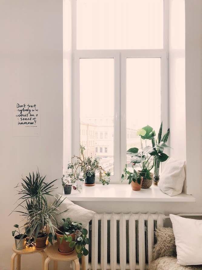 Pot-Plants-On-Window-Ledge-And-Coffee-Table