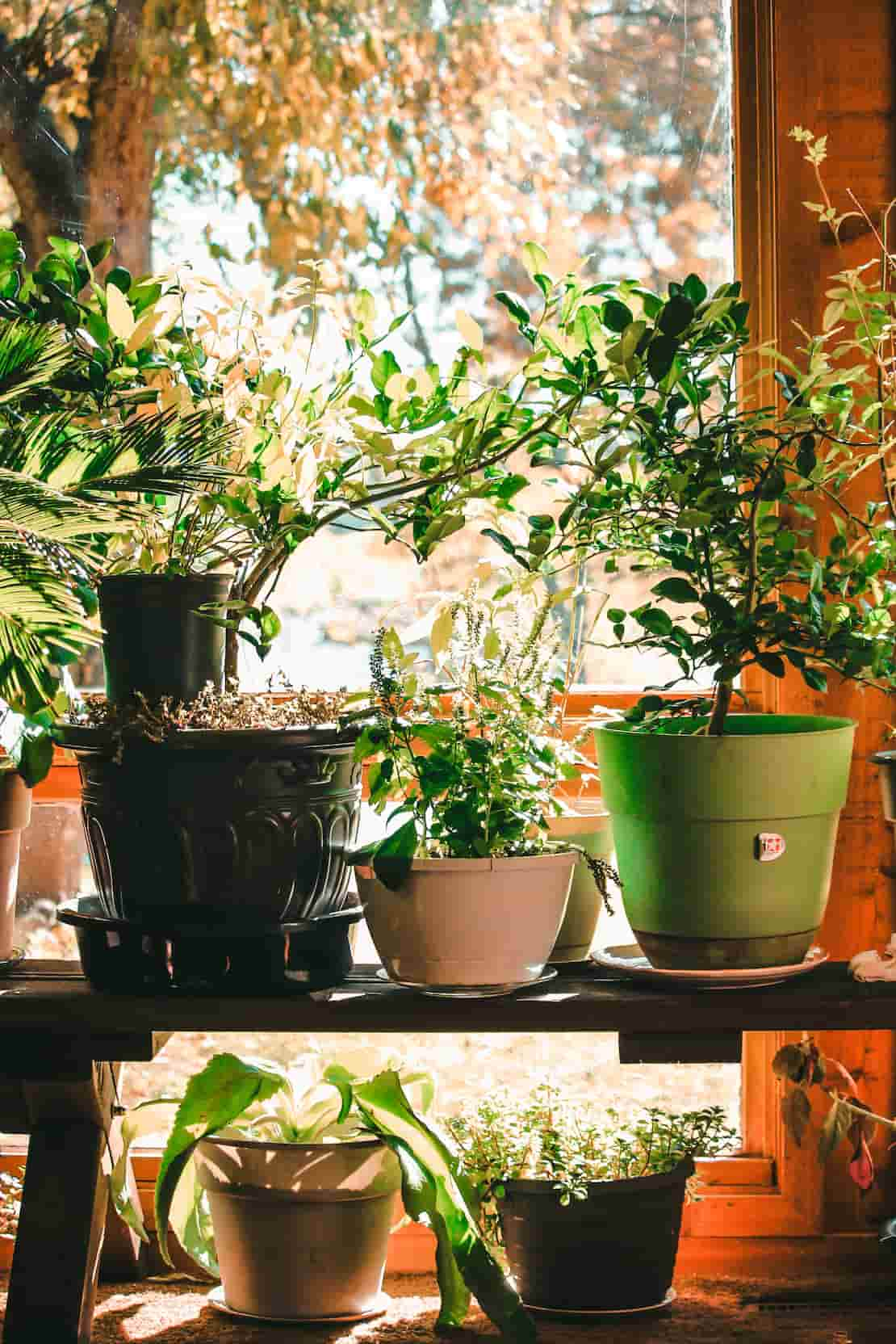 Prepare-garden-for-house-veiwing